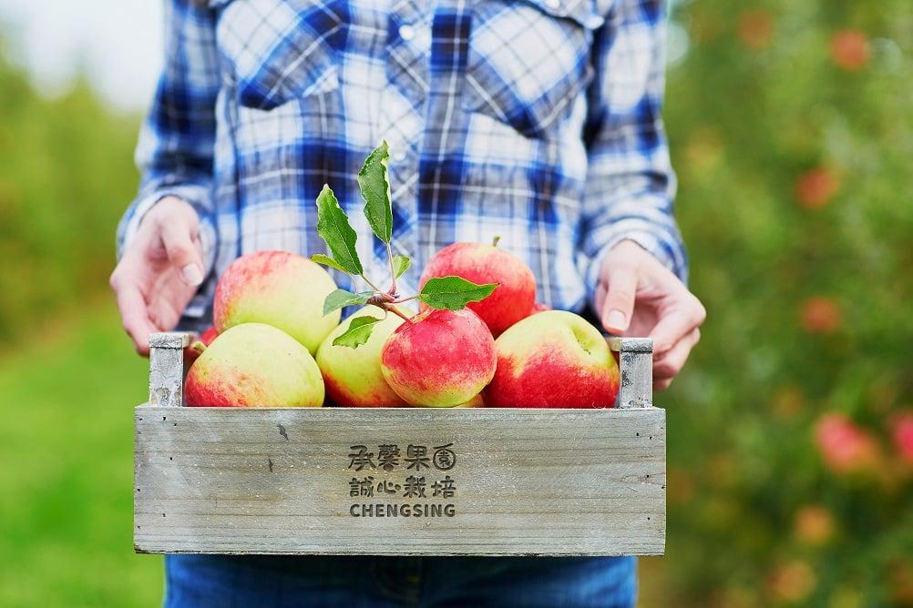 承馨果園 LOGO設計 形象設計 品牌設計 商標設計